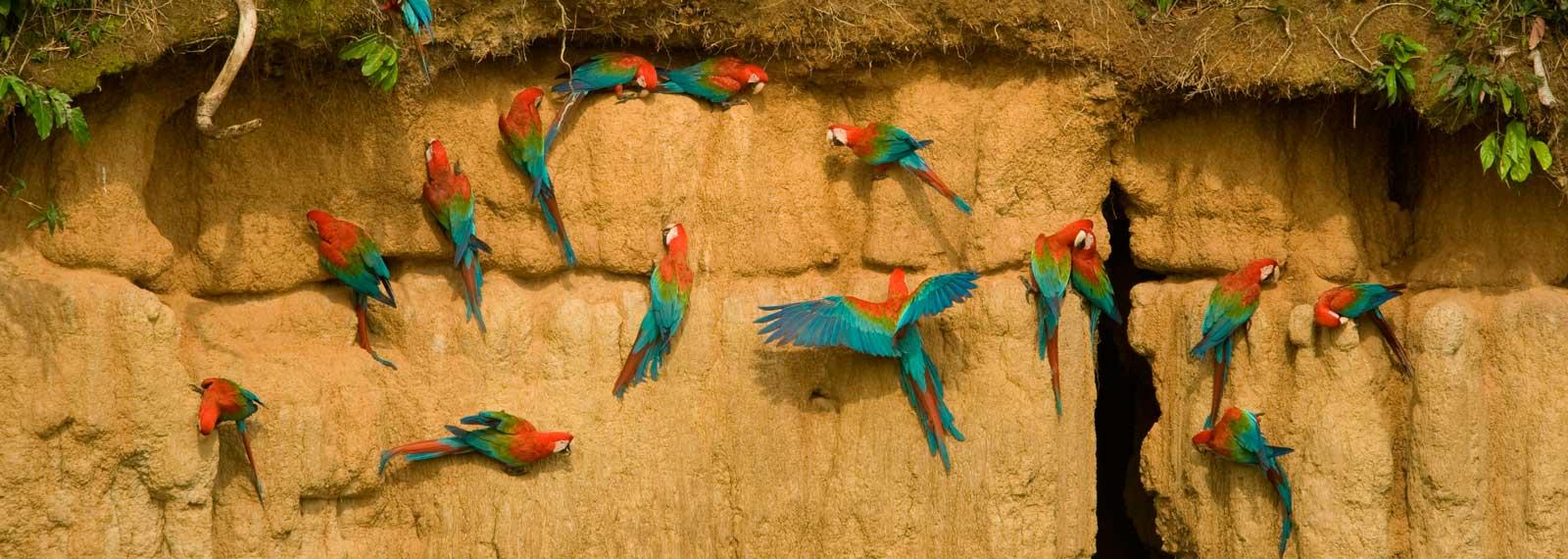 Peru amazon tours, Wild birds